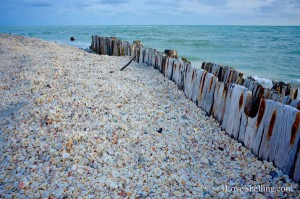 Shells pile up on wood jetty Sanibel