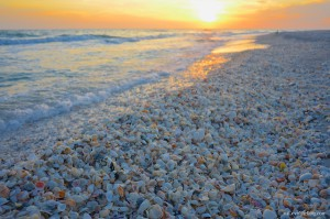 Sunset and seashells At Bowmans Beach Sanibel