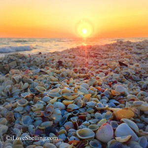 Sunset over seashells on Sanibel Island Florida