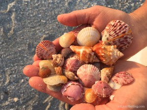 Sweet shells from Sanibel
