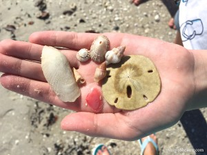 beach finds from sw florida