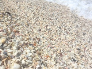lots of shells washing with the surf