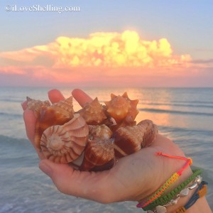 shell finds with cumulus clouds
