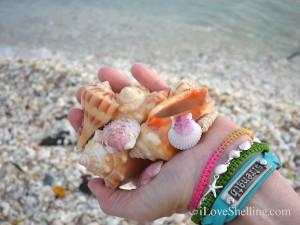 shells and bracelets
