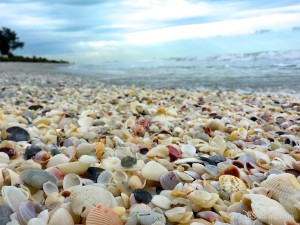 shells on the beach with cloudy skies