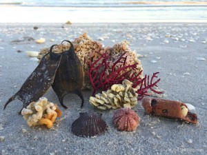 Beach Bling. marine egg capsules coral sea whips