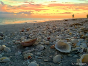 Beach combing at Sunset on Sanibel Island Florida
