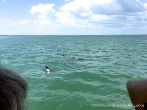 Captiva Cruises dolphin watching boat ride
