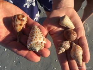 Chris Jamie Sanibel shells