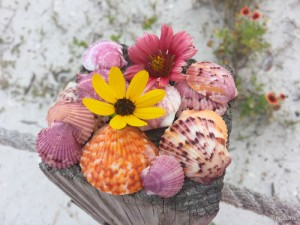 Colorful Sanibel scallop shells with beach daisies