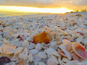 Island Inn Sanibel's beach of sea shellsIsland Inn Sanibel's beach of sea shells