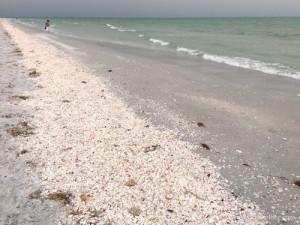 Long stretch of seashells on Sanibel
