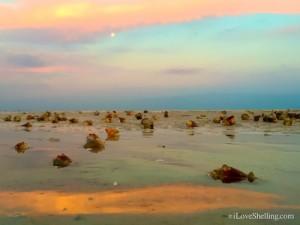 Sanibel full moon shelling at low tide