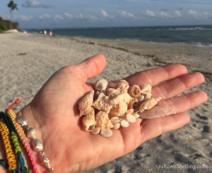 Sanibel shells found high on beach