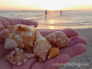 Sanibel sunset beach finds