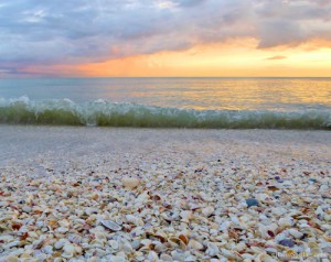 Seashells, waves and golden sky
