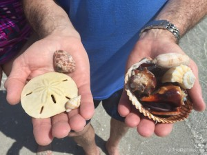 Shells and Sand dollars found during Rotary International 6960 conference