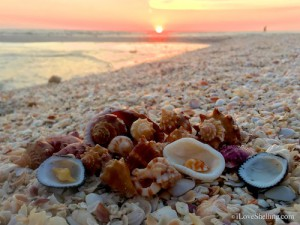 Sunset with shells at Blind Pass Sanibel