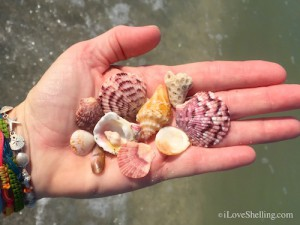 a few treasured seashells