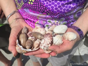 hands full of seashells at RI 6960