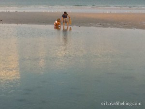 little shellers collecting sea shells