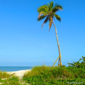 one palm tree, one gulf of mexico