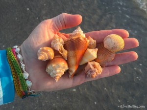 orange and yellow seashells