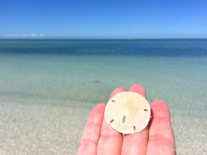 sand dollar in clear water