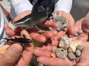 shark beach bling finds and sea shells