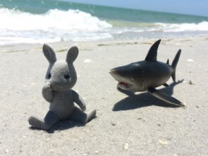 shark chasing bunny to florida beach