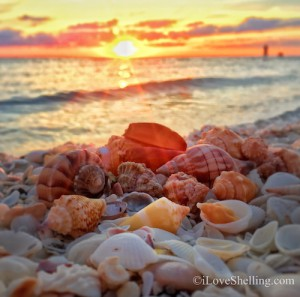 sunset over sanibel sea shells