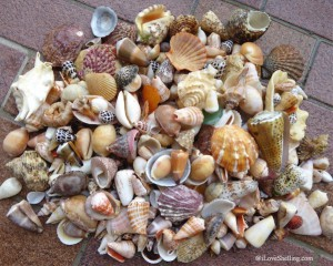 Beach finds from one day shelling in Okinawa Japan