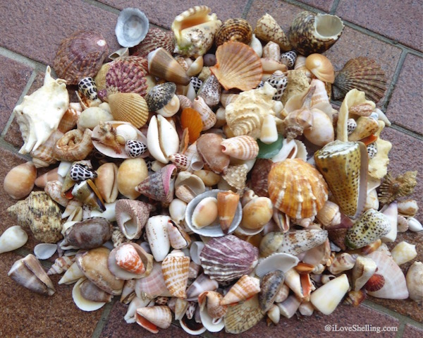 Our Exshellent Beach Combing Adventure in Okinawa Japan