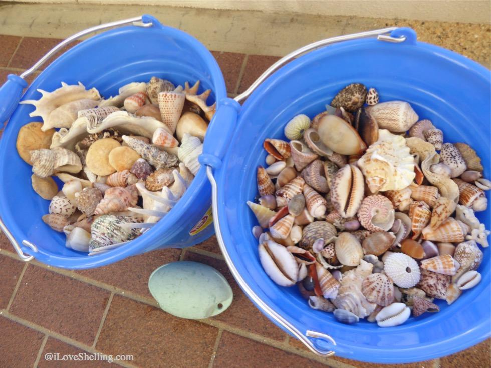 Buckets of seashells from Okinawa Japan