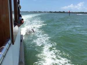 Captiva Dolphin and shelling cruise