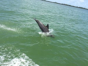 Dolphin jumping next to our boat