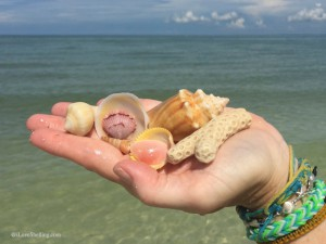 Florida shell finds