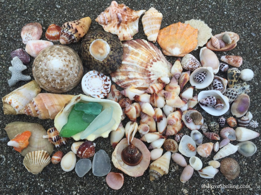 U.S. Marine Clarissa's shell collection Okinawa