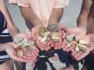 shells found in sw florida