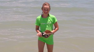 Abigail found Sanibel horse conch