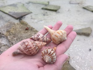 Collecting shells around rocks
