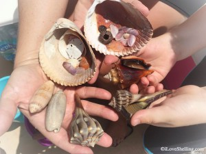 Florida Beach finds July 2015