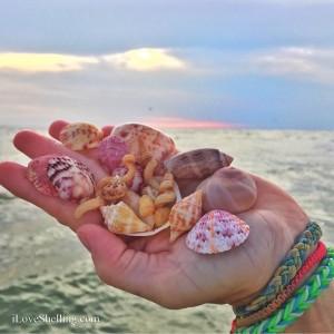 Hand of Colorful Sanibel sea shells