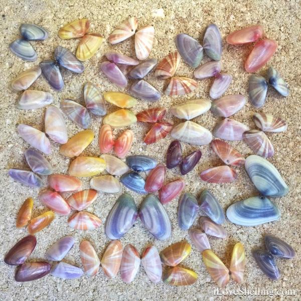 Seashell Repurposing