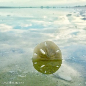 Reflecting on the power of the dollar-  a sand dollar