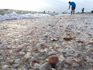 Sanibel Seashells at the water edge