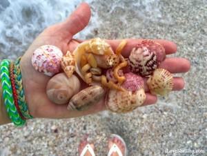 Sanibel beach comber shells