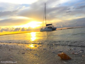 Sanibel catamaran at sunset with a shell