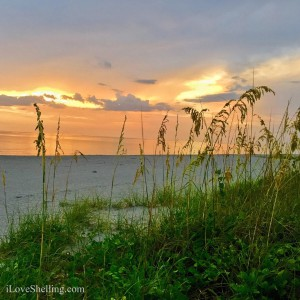 Sanibel sunset through sea oats