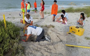 Sccf volunteers count sea turtle eggs